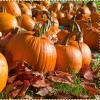4 Things to Do With Pumpkins